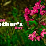 Honoring Single Mothers on Mother's Day